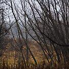 Foggy Woods by Sharlene Rens