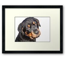 Female Rottweiler Puppy Making Eye Contact Vector Isolated Framed Print