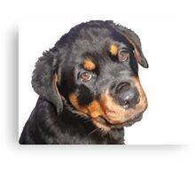 Female Rottweiler Puppy Making Eye Contact Vector Isolated Canvas Print