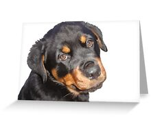 Female Rottweiler Puppy Making Eye Contact Vector Isolated Greeting Card