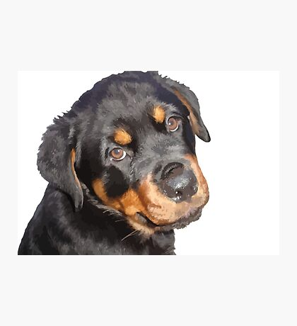 Female Rottweiler Puppy Making Eye Contact Vector Isolated Photographic Print