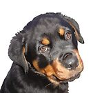 Female Rottweiler Puppy Making Eye Contact Vector Isolated by taiche