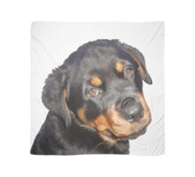 Female Rottweiler Puppy Making Eye Contact Vector Isolated Scarf