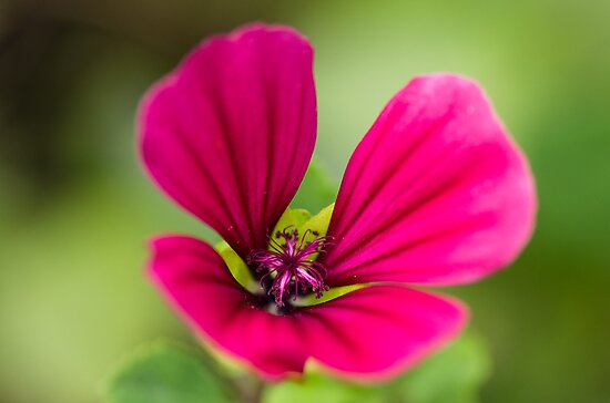 Pink on Green by Karen Havenaar