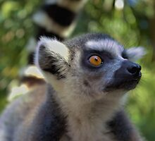 Leaping Lemur by wlartdesigns