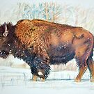 Bison by itchingink