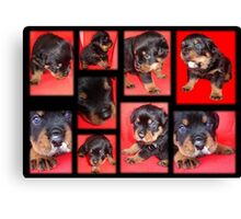 Cute Rottweiler Puppy Collage Canvas Print