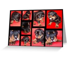 Cute Rottweiler Puppy Collage Greeting Card