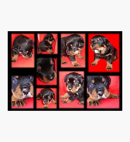 Cute Rottweiler Puppy Collage Photographic Print