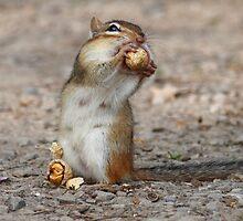 """it's not easy being a Chipmunk!"" by Alinka"