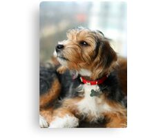 Sniff Canvas Print