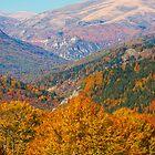 Layers of fall by Gorazd Milosevski