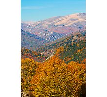 Layers of fall Photographic Print