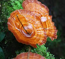 Fungus on fallen tree by BenClarkImagery