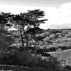 Treescape by jebCreate
