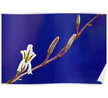 Small Aloe Flower Poster