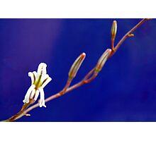 Small Aloe Flower Photographic Print