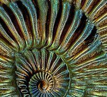snake-stone by E-creative