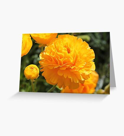 Sunshine in my life today... Greeting Card