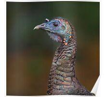 Turkey profile  Poster