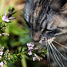 Taking time out to smell the flowers by Elaine Game