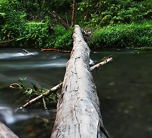 River Log Crossing by BenClarkImagery