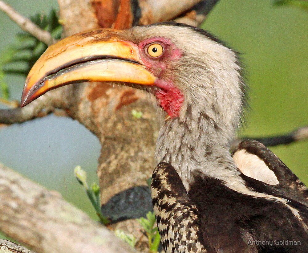 Yellow billed hornbill profile by jozi1