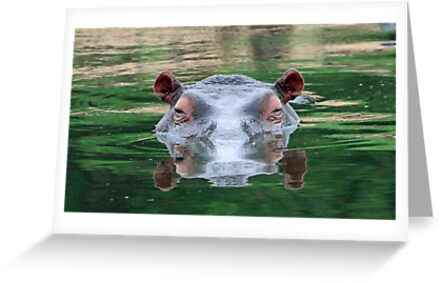Hippo reflections by jozi1