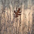 Fallen oak leaf by Jill Vadala