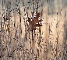 Fallen oak leaf by Jill Vadala