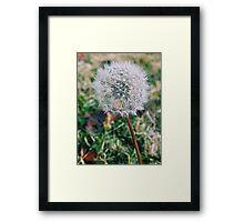 Dandelion Seed  Framed Print