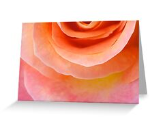 Sunset Peach Rose Greeting Card