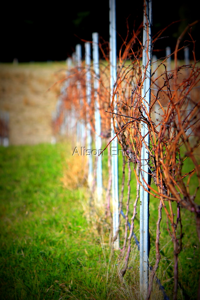 Hanging Rock Winery, Victoria, Australia - 2012 by Alison  Eno