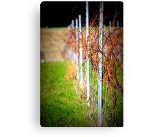Hanging Rock Winery, Victoria, Australia - 2012 Canvas Print