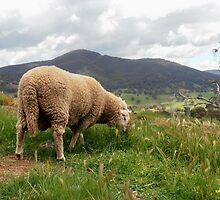 The Good Life, near Tumut, New South Wales, Australia. by kaysharp