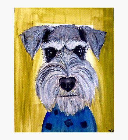 Face schnauzer dog art Photographic Print