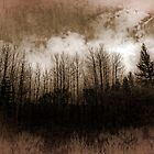 Winter Trees by Dianne Phelps
