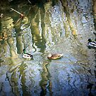 Ducks on a Pond by PPPhotoArt