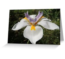 Reach for the Sky, Rainlily, Tumut, Australia. Greeting Card