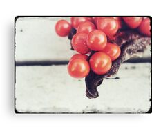 Seed Pods I Canvas Print