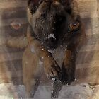 k9 unleashed water and snow by quincy