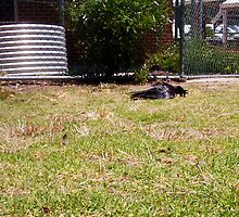 A Crow Lays An Egg - 02 12 12 by Robert Phillips