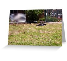 A Crow Lays An Egg - 02 12 12 Greeting Card
