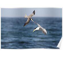 Sea Swallows Poster
