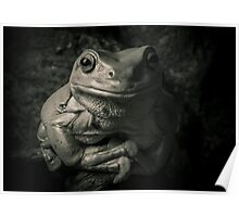Portrait Of A Green Tree Frog B&W Poster