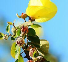 Summer Flowers by Damien Scrivano