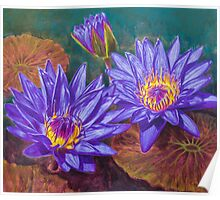 Water Lilies 9 Poster