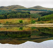 Green Reflections by Donald  Stewart