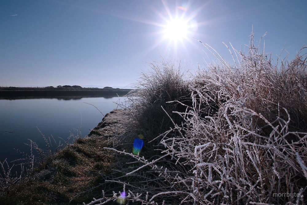 frosty branches in snow against blue dawn and river by morrbyte