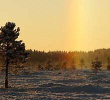 4.12.2012: Halo by Petri Volanen